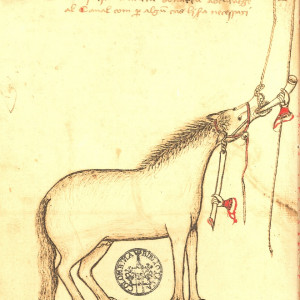 6. Way of administering beverages to the horse. Manuel Díez, 'Llibre de la menescalia'. Seville, Biblioteca Colombina, MS 5-4-46, f. 7v (mid 15th C).